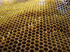 Honeybees construct hexagonal cells to hold their honey, another example of sacred geometry