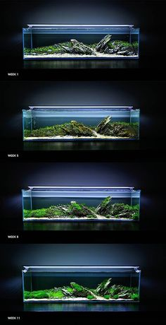 """Evoluzione di un """"Iwagumi"""" in sole 11 settimane. Affascinante."""