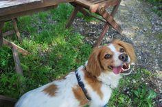 Brina Smiles - Brina smiles at Paradiso dei Gatti - Borgo Val Di Taro, Parma… Parma, Corgi, Smile, Animals, Corgis, Animales, Animaux, Animal, Animais