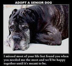Adopt a senior ♥