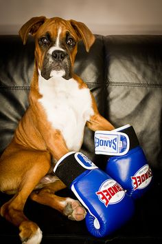 #Boxer #Puppy #Dogs