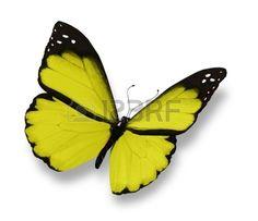 papillon: Papillon jaune, isolé sur blanc