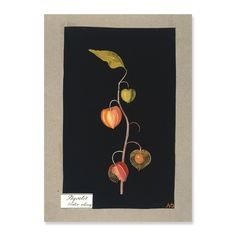 Physalis (winter cherry); Mary Delaney's paper collages (1772-88).  The delicate cage around the fruit to the lower right is a very carefully preserved piece of the real plant.  More than 200 years old and it's still here...
