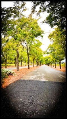 Sterling Winery, Calistoga, CA Photo by: dijvio