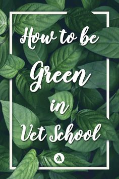 6 simple ways you can reduce your carbon footprint in veterinary school.