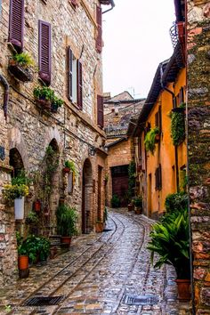 Travel Inspiration for Italy - Spello, Umbria, Italia Places Around The World, The Places Youll Go, Travel Around The World, Places To See, Around The Worlds, Italy Vacation, Italy Travel, Italy Trip, Italy Tours