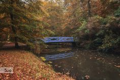 Bridge in the autumn park by Julia Heikens on 500px
