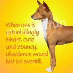 Basenji Dog Obedience Overkill Fridge Magnet | eBay