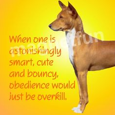 Basenji Dog Obedience Overkill Fridge Magnet | eBay