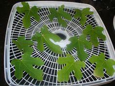 Bella Blue Jungle: Fig leaves and tea recipe