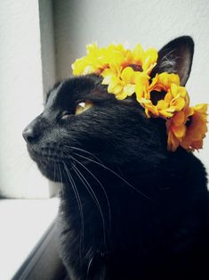 black cat with flower crown Check more at http://blog.blackboxs.ru