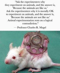 Vegan Facts, Vegan Memes, Vegan Quotes, Stop Animal Testing, Stop Animal Cruelty, Mercy For Animals, Why Vegan, Vegan Animals, Animal Rights