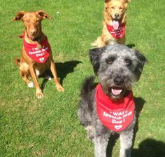 Dog Charities, Stray Dog, Charity, Dogs, Animals, Animales, Animaux, Pet Dogs, Doggies