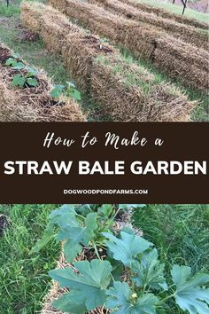 Straw Bale Gardening for Beginners: How to Grow Vegetables in Straw Straw bale gardening is a cheap, easy way to grow vegetables if you have bad soil or don't have much time to garden. Learn how any gardener can start a straw bale garden today. Straw Bale Gardening, Container Gardening, Herb Gardening, Gardening Vegetables, Gardening Hacks, Gardening Quotes, Container Houses, Indoor Gardening, Flower Gardening