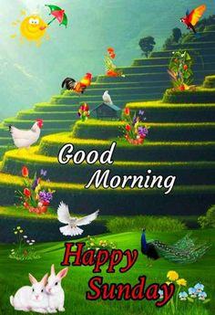 Good Morning Happy Sunday, Good Morning Picture, Good Morning Flowers, Morning Pictures, Good Morning Wishes, Good Morning Images, Old Monk, Sunday Wishes, Good Morning Wallpaper