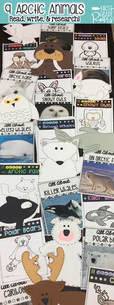 Research about 9 different Arctic animals.  Read how I use this with my first graders to introduce research.