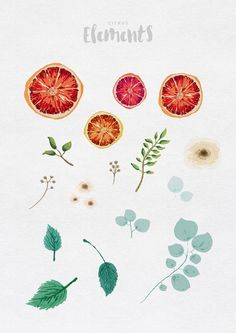 Citrus Watercolour Collection by GraphicSupplyCo. on @creativemarket