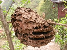 An old natural beehive by marrted, via Flickr