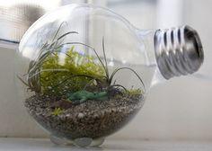 small terrarium Make a small terrarium in a light bulb
