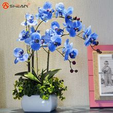 Sky Blue Phalaenopsis Orchid Seeds Flower Seeds Indoor Bonsai Orchids 100 particles / lot(China (Mainland))