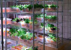 The Ultimate Ikea Hack: A Hydroponic Farm - Modern Farmer garden indoor hydroponic systems Backyard Aquaponics, Aquaponics Fish, Hydroponic Gardening, Indoor Gardening, Hydroponic Vegetables, Growing Vegetables, Growing Herbs, Veg Garden, Water Garden