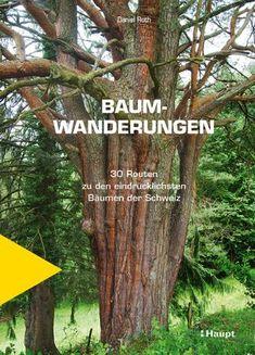 Roth, Daniel «Baumwanderungen. 30 Routen zu den eindrücklichsten Bäumen der Schweiz» | 978-3-258-08241-7 | www.haupt.ch Plants, Flora, Products, Old Trees, Storytelling, Switzerland, Tree Structure, Cards, Plant