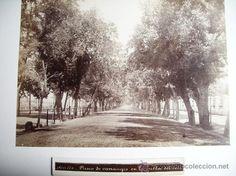 1888-PASEO DE CARRUAJES A ORILLAS DEL GUADALQUIVIR.SEVILLA.FOTÓGRAFO CASTILLO.FOTO ORIGINAL.ALBÚMINA (Fotografía Antigua - Albúmina)