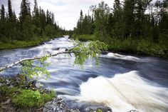 Lapland River - Wall Mural & Photo Wallpaper - Photowall