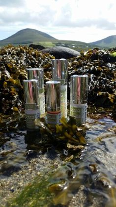 Ocean Bloom's Shop shows pictures and details descriptions of each product Organic Facial, Healing Power, Nutritious Meals, Seaweed, Irish, Bloom, Range, Ocean, Cosmetics