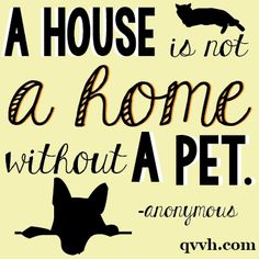 Do you agree? #petquote #qvvh