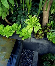 Canary Islands Spa Garden by Amphibian Designs - James Wong & David Cubero, via Flickr