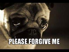 40 Adorable I'm Sorry Memes People Won't Be Able To Resist Forgive Me Meme, Forgive Me Please, Say Please, Im Sorry Meme, Sorry Quotes, Really Sorry, Saying Sorry, Me Too Meme, Forgiveness
