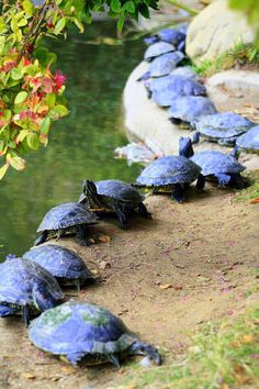 A Turtle Parade! How cute, I love turtles! Animals And Pets, Baby Animals, Funny Animals, Cute Animals, Wild Animals, Reptiles And Amphibians, Mammals, Beautiful Creatures, Animals Beautiful