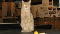 Stubbs the cat has been mayor of Talkeetna, Alaska, for 15 years, since he was a kitten.