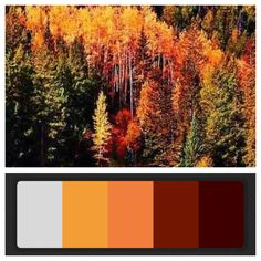 fall wedding colors | all of these would look gorgeous with navy