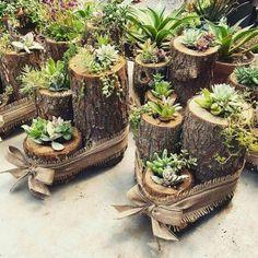 Cactos e suculentas em vasos de madeira | Como fazer em casa