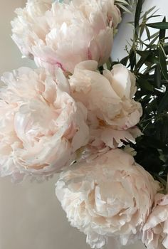 TheFullerView - love-lesbelleschoses: My amazing peonies at my. My Flower, Flower Pots, Peonies And Hydrangeas, Pink Peonies, Rose Pictures, Amazing Pictures, Plants Are Friends, Outdoor Plants, Flowers Nature