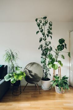 115 Simple Foliage Living Room Ideas For Summer That Make Coolest House - javgohome-Home Inspiration Cool Plants, Green Plants, Indoor Plant Pots, Indoor Gardening, Gardening Tips, Plant Aesthetic, Decoration Plante, Balcony Plants, Interior Plants
