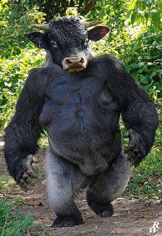Un impresionante gorila toro