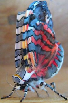 colorful moths - Google Search