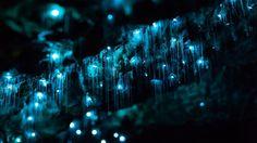 The Glowworm Caves