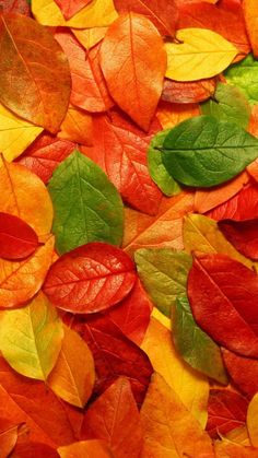 40 Cute Fall Wallpapers For iPhone That Are Absolutely Free - Oge Enyi