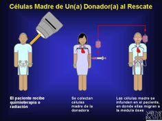 donantes de células madre