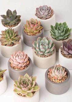concrete planters, perfect for succulents. By - Beautiful handmade concrete planters, perfect for succulents. By … Beautiful handmade concrete planters, perfect for succulents. By - Beautiful handmade concrete planters, perfect for succulents. Crassula Succulent, Succulent Care, Succulent Gardening, Succulent Terrarium, Organic Gardening, Succulent Garden Diy Indoor, Succulent Ideas, Container Gardening, Gardening Tips