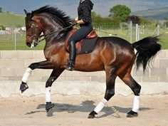 not too many brown dressage saddles out there, looks good here (horse and rider not bad either) ; )