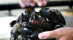 Der er plastpartikler i 80 procent af alle blåmuslinger ved Norges kyst. Undersøgelse bekymrer forsker.