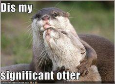 Dis my siggo otter