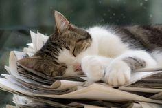 dreaming animals | cat, dream, sleep, nice, cute, animal on favimages