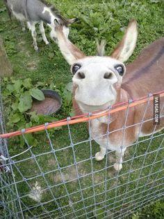 Met this happy donkey today