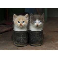 子猫の画像が嫌いすぎてじんましんが出るんだけど・・・